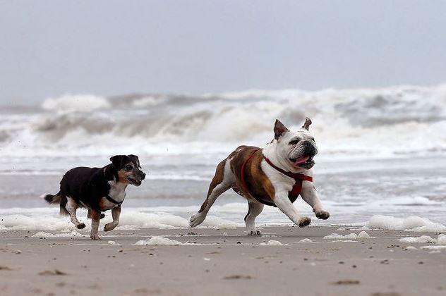 Honden, hoek-van-holland, strandtent