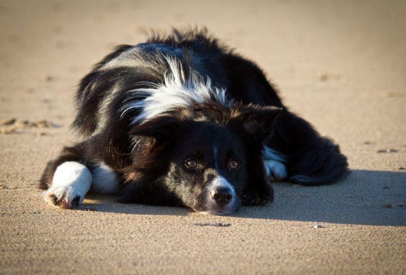 honden, losloopgebied, hoek-van-holland, beleid